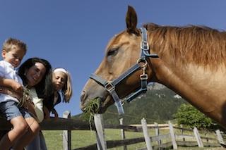 """Auch Pferde finden sich auf vielen Südtiroler Bauernhöfen; Foto: Frieder Blickle/""""Roter Hahn"""""""