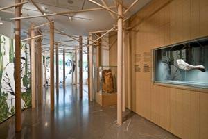 Wichtige Fundstücke aus dem Alpenraum während der Kupferzeit werden in der zweiten Etage des Museum lebendig dargestellt. - Foto: Südtiroler Archäologiemuseum/DPI