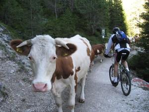 Vorsicht! Gegenverkehr. - Foto: Tourismusverein Gröden