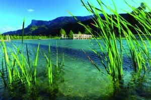 Das Naturbad Gargazon verzichtet bei der Wasserreinigung gänzlich auf chemische Zusätze; Foto-Georg Mayr