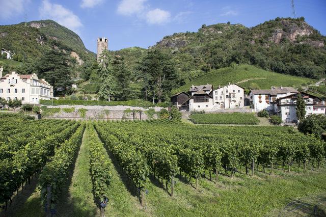 Das Weingut Rottensteiner liegt idyllisch mitten in Bozens Weinbergen, Foto: Alex Filz