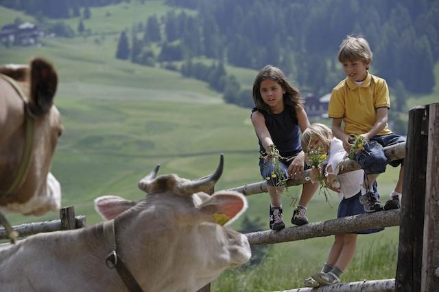 Die Bauernhöfe des Roten Hahn bieten wunderbaren Urlaub für Familien, Foto: smg