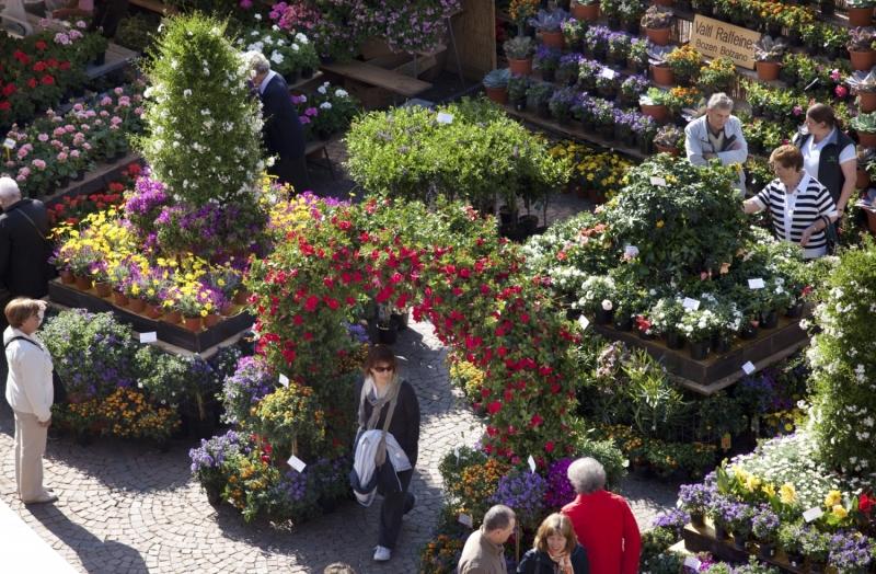 Beliebt beim Publikum: Blumen-Ausstellungsparcours vor dem Bozner Dom, Foto: Verkehrsamt Bozen