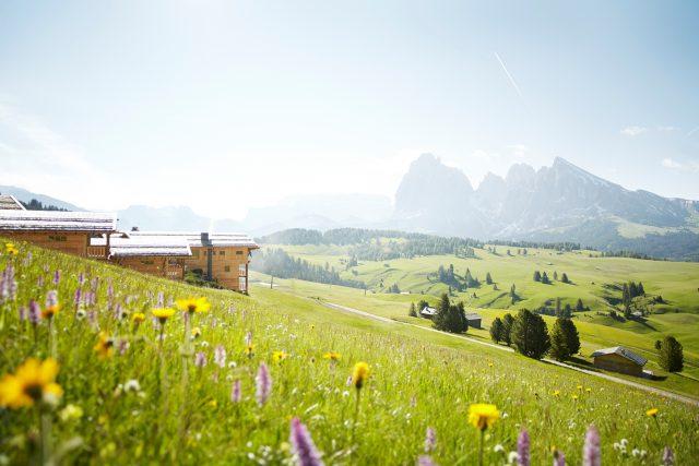 Blütenwiese auf der Seiser Alm; Foto: Adler Mountain Lodge