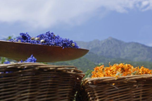 Getrocknete Blüten von der Seiser Alm; Foto Frieder Blickle