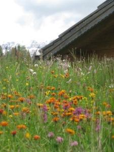 Wohltat für Herz und Augen: Bergblumen im Grödnertal; Foto: Heiner Sieger