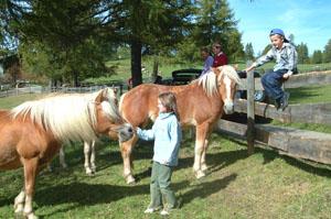 Zutraulich: Haflinger Pferde auf dem Salten. Foto: Tourismusverein Jenesien