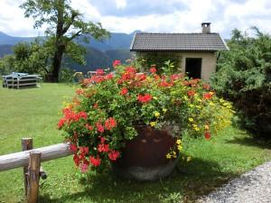 Blumen am Wegesrand lassen so manche Qual für einen Augenblick vergessen. - Foto: Dieter Warnick
