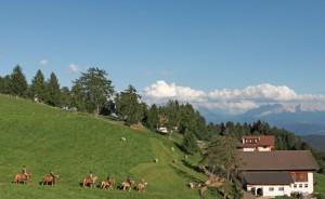 Südtirol auf dem Rücken der Pferde entdecken
