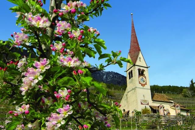 Das Südtiroler Dorf Algund versinnkt im Frühjahr in einem Meer von Apfelblüten; Foto: Daniela Prossliner