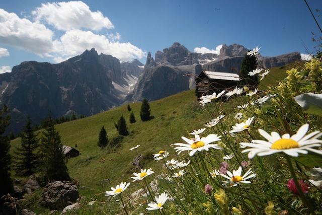 Natur pur: Almwiese mir Dolomitenblick; Foto: Freddy Planinschek, AltaBadia