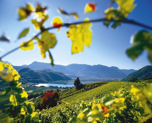 350.000 Hektoliter Wein wird die diesjährige Weinlese erwirtschaften, Foto: Clemens Zahn, smg