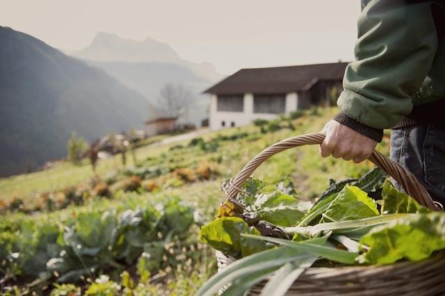 Hoch oben im Eisacktal gedaihen manch exotische Gemüse.