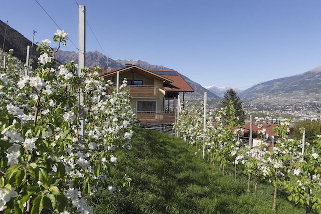 """Die Südtiroler Obstbauernhöfe sind besonders im Frühling zur Apfelblüte eine Reise wert. Foto: """"Roter Hahn""""/Frieder Blickle"""