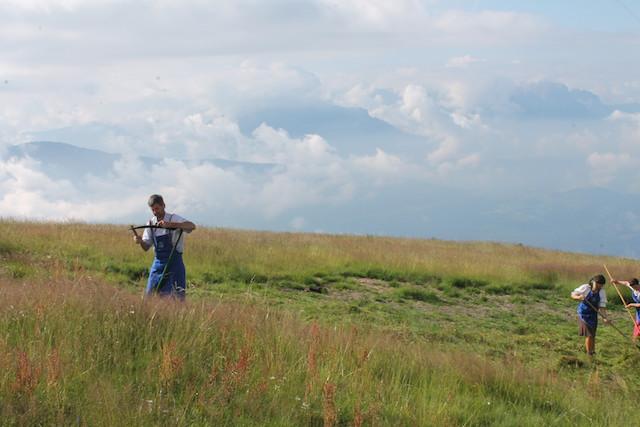 Nach dem Wetzn läuft die Sense wieder fast wie von selbst durchs Gras, Foto: Heiner Sieger