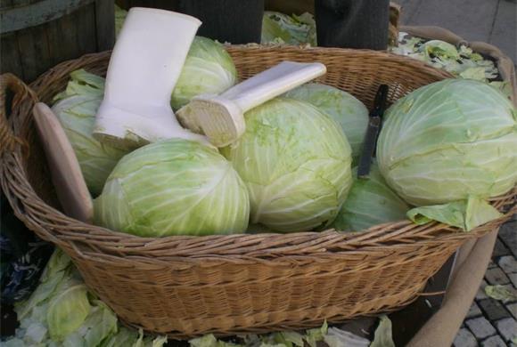 Weißkraut ist für die Bauern im Vinschgau ein Grundnahrungsmittel; Foto: TV Schlanders-Las